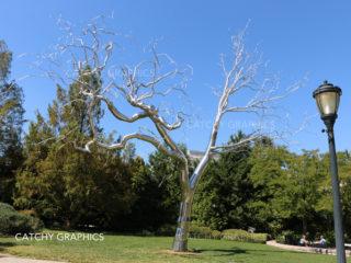 CG-TREE