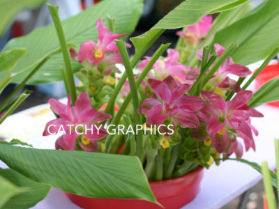 Flower_10 copy