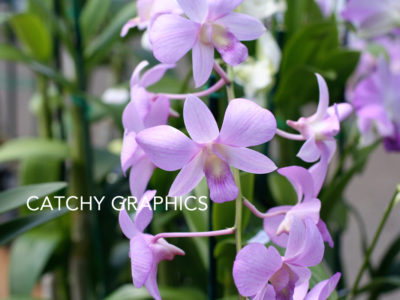 Flower_2 copy