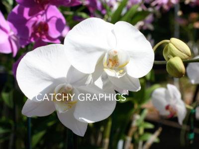 Flower_4 copy