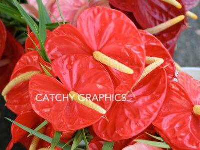 Flower_6 copy