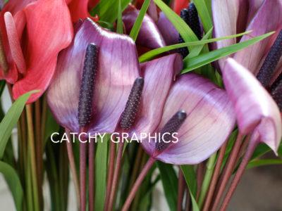 Flower_8 copy