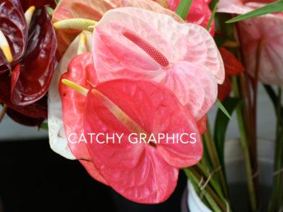 Flower_9 copy