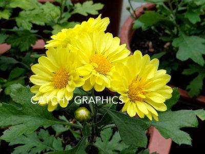 Flowers_17 copy