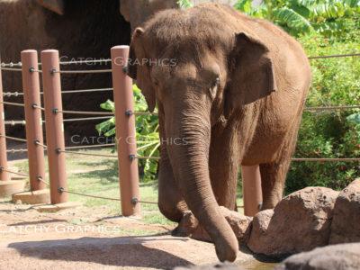 elephant-1 copy