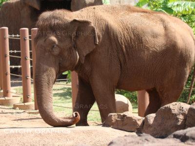 elephant-2 copy