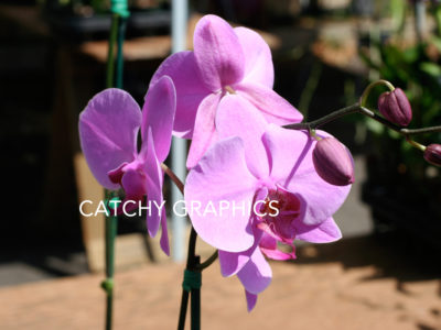 flower_3 copy
