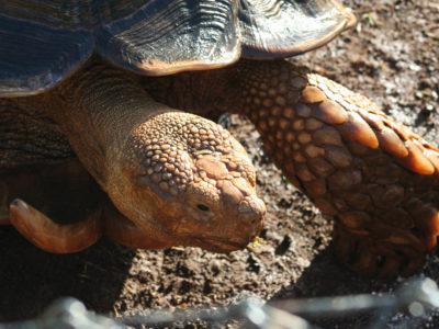 turtle-1 copy